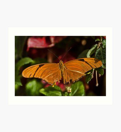 Orange Beauty Art Print