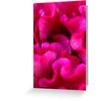 Pink Coral Greeting Card