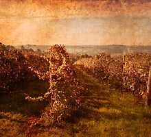 Autumn Vineyard by pennyswork
