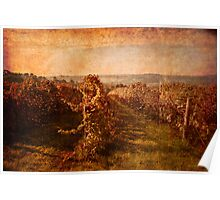 Autumn Vineyard Poster