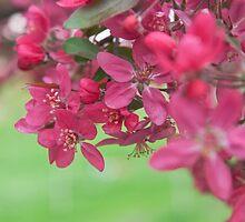 Spring by Bogdan Ciocsan