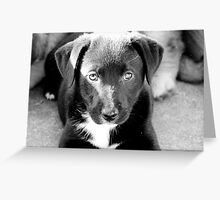 Willow the Puppy Greeting Card