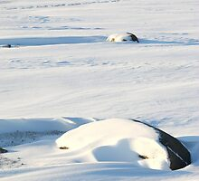 Early Morning on the Tundra #2, Churchill, Canada by Carole-Anne