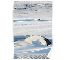 Early Morning on the Tundra #2, Churchill, Canada Poster