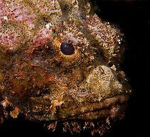 Scorpionfish (Scorpaenopsis oxycephala) by bennystoors