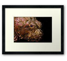 Scorpionfish (Scorpaenopsis oxycephala) Framed Print