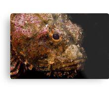Scorpionfish (Scorpaenopsis oxycephala) Metal Print