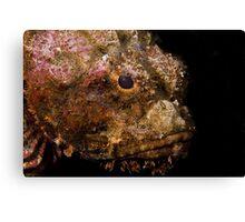 Scorpionfish (Scorpaenopsis oxycephala) Canvas Print