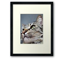 Merlin The Maine Coon Framed Print