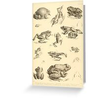 The Reptiles of British India by Albert C L G Gunther 1864 0531 Frogs Greeting Card