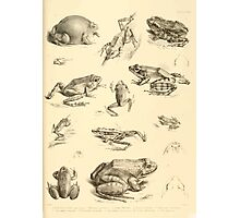 The Reptiles of British India by Albert C L G Gunther 1864 0531 Frogs Photographic Print