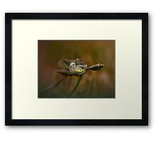 Colver Dew Drop Baby Framed Print