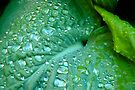 Wet by Ainsley Kellar Creations