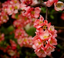 Garden Blossom In The Sunshine by OhBlee