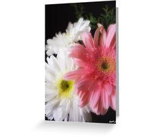 Gerbera Daisy 4 Greeting Card