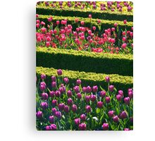 Formal Flower Bed Rows Canvas Print