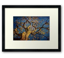 Curls Framed Print