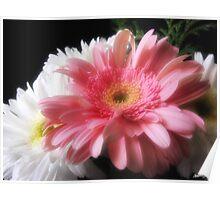 Gerbera Daisy 5 Poster