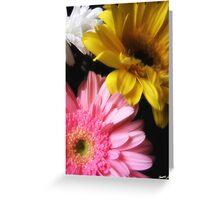 Gerbera Daisy 8 Greeting Card