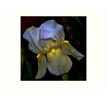 """All  in favor say """"Iris"""" Art Print"""