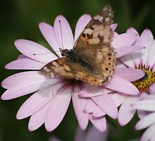 Butterfly on Flower by Sean Foreman