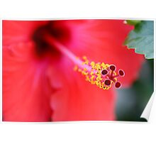 Red Hibiscus 6 Poster
