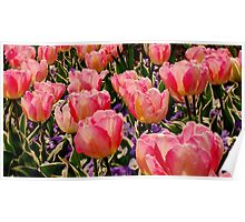 A Crowd Of Tulips Poster
