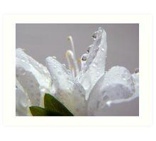 Raindrops on White Azalea Art Print