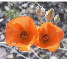 Beauty in The Mojave Photographic Print