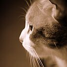 Sepia Toned Loving - 2 by meowiyer