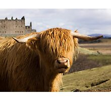A Heilan Coo Photographic Print
