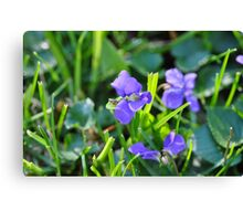 Violets in the grass Canvas Print