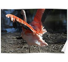 Flightless Bird Poster