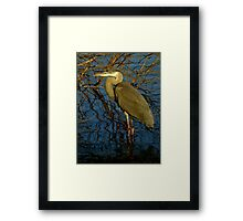 Not Quite The Chameleon Framed Print