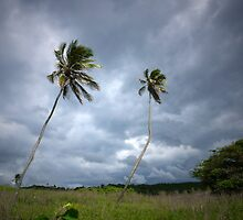 Twin Palms - Wildnerness Beach, Puerto Rico by Caitlin Connors