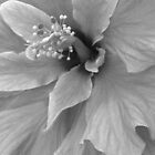 Hibiscus Flower by Nicole S. Moore