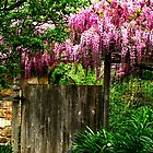 Singing On The Garden Gate by NatureGreeting Cards ©ccwri