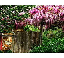 Singing On The Garden Gate Photographic Print