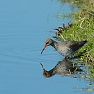 Redshank & Reflection by Robert Abraham