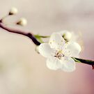 Spring is in the air by CoffeeBreak