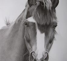Welsh Pony by KarenWoodArt