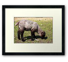 Spring Lamb I Framed Print
