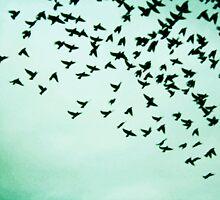 Birds  by Dreamfolorn