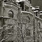 Snow dust by DarylE