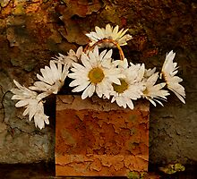 A Bag of Daisies by Barbara Ingersoll