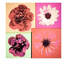Flowers four you Photographic Print