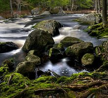 Spirits of the Water by Sue  Cullumber