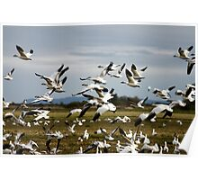 Wild Geese Poster