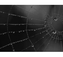 Water storage spider style Photographic Print