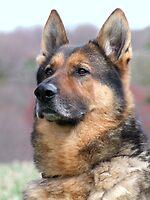 War Dog by Lolabud